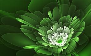 Картинка цветок, линии, лепестки, зелёный