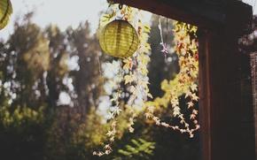 Картинка листья, фонарик, растение