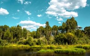 Картинка зелень, лес, лето, небо, облака, деревья, река, берег