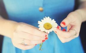 Картинка девушка, цветы, фон, обои, руки, ромашка, цветочек