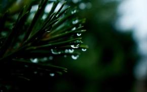 Картинка капли, макро, дождь, хвоя, macro, drops, кедр