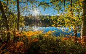Обои Норвегия, деревья, осень, озеро, папоротник