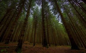 Обои леса дерево, вечер, сумерки, природа, full hd 2560x1440, деревья, фото в лесу