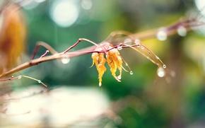 Картинка осень, капли, макро, желтый, природа, листок, размытие, ветка, nature