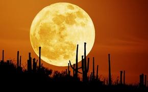 Картинка небо, ночь, луна, пустыня, кактусы