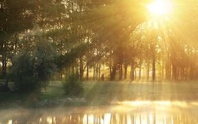 Картинка зелень, листья, вода, солнце, лучи, деревья, природа, озеро, река, фон, дерево, обои, листва, человек, wallpaper, ...