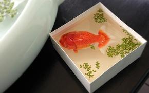Картинка вода, коробка, рыбка, рыба, вид сверху, золотая, ряска, ёмкость