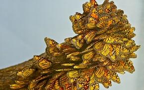 Картинка макро, много, бабочки