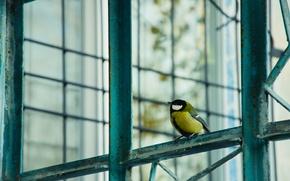Картинка осень, птица, решётка, синица