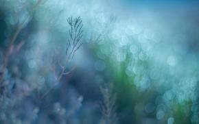 Картинка трава, макро, растения, боке