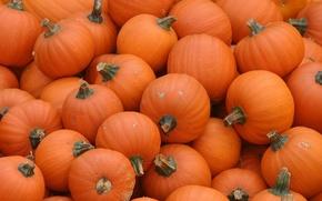 Обои тыквы, Pumpkins, оранжевый