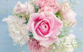 Картинка Pink rose, flowers, цветы, красивая, beautiful, Розовая роза