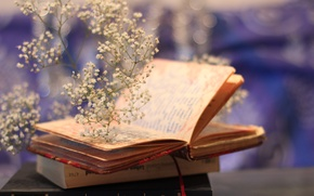 Картинка цветы, фон, книги