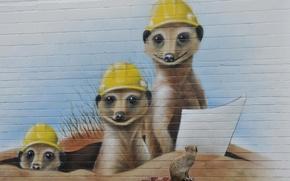 Картинка стена, граффити, сурикаты
