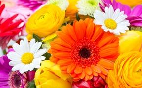 Картинка цветы, ромашки, тюльпаны, герберы, flowers, tulips, daisies, gerberas