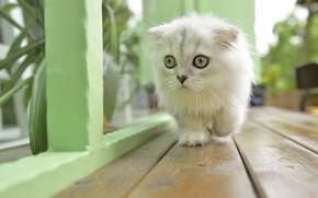 Картинка усы, кошак, кошка, глаза, кот