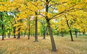 Обои парк, трава, деревья, листья, осень