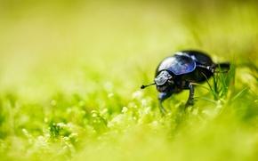 Картинка лето, трава, жук, боке