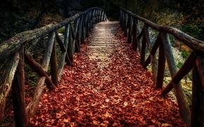 Картинка осень, листья, мост