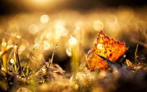Картинка макро, лист, осень, природа, трава, желтый, коричневый