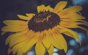 Картинка цветок, макро, подсолнух, семечки