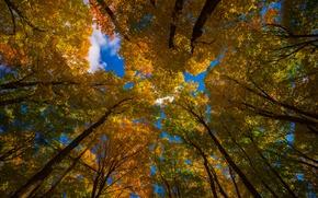 Картинка осень, небо, листья, деревья, природа