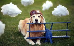 Картинка собака, шлем, самолёт