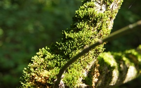 Картинка лес, лето, трава, природа, зеленый, мох