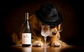 Картинка шляпа, очки, бутылка, вино, рюмка, Ретривер, настроение, юмор