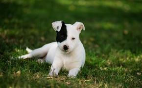 Картинка трава, собака, щенок