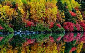 Картинка осень, лес, листья, деревья, река, кусты, багрянец