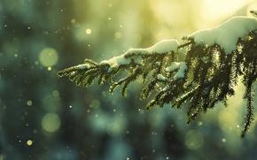 Картинка зима, снег, природа, ель