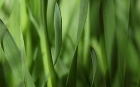 Картинка макро, полоски, узкие, зелень, трава, листья