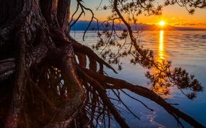 Картинка дерево, озеро, корни, Michigan, солнце, сосна