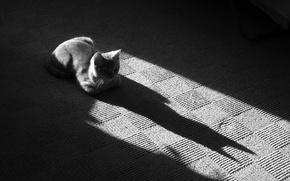 Обои Черно-белая, коврик, 157, кошак, тень