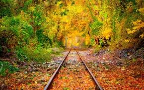 Картинка лес, деревья, листва, рельсы, Осень