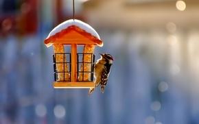 Картинка снег, размытость, птичка, Кормушка