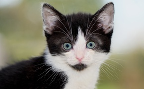 Картинка взгляд, мордочка, котёнок
