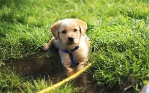Картинка трава, зеленый, green, собака, милый, grass, dog, cute