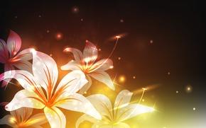 Картинка свет, блики, лилии, Цветы