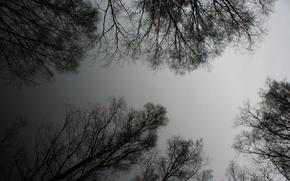 Картинка деревья, пейзаж, силуэт, черное и белое, реальное фото