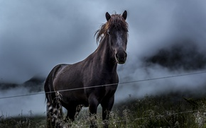 Картинка grass, field, mountains, clouds, fence, horse, wire, countryside, countryside scene