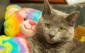 Картинка взгляд, игрушка, кошак, котяра