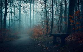 Обои осень, парк, скамья, дорога, туман