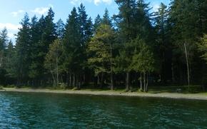 Картинка лес, деревья, река, Природа, forest, river, trees, nature
