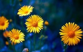 Картинка желтые цветы, макро, лепестки, природа