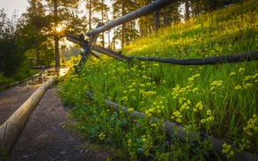 Картинка дорога, лес, трава, солнце, деревья, закат, цветы, природа, парк, восход, весна, grass, forest, road, trees, …