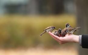 Картинка птицы, настроение, рука