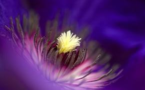 Обои лепестки, краски, цветок, природа