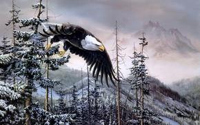 Christopher B. Walden, Heaven & Earth, живопись, орел, птицы, лес, ель, горы, зима, белоголовый орлан, белоголовый орел обои